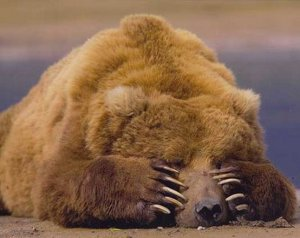 carna-orso-594